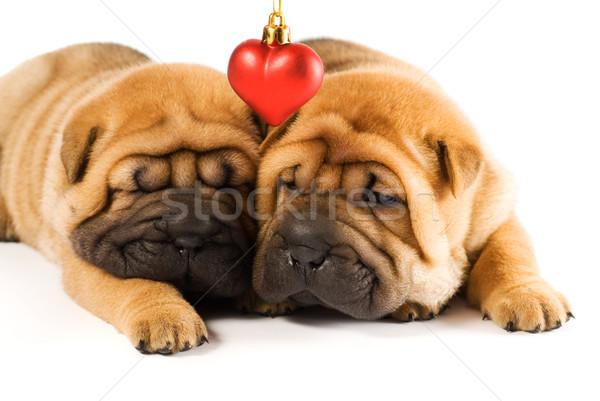 Dois sharpei filhotes de cachorro amor cão cara Foto stock © Nejron
