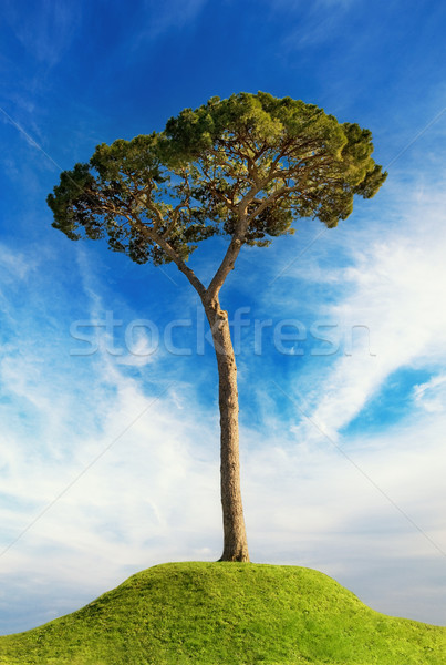 Tree over hill. Spring background Stock photo © Nejron