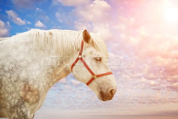 Fehér ló kék felhős égbolt nap napfelkelte Stock fotó © Nejron