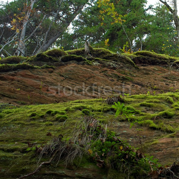 Picture of a mountain Stock photo © Nejron