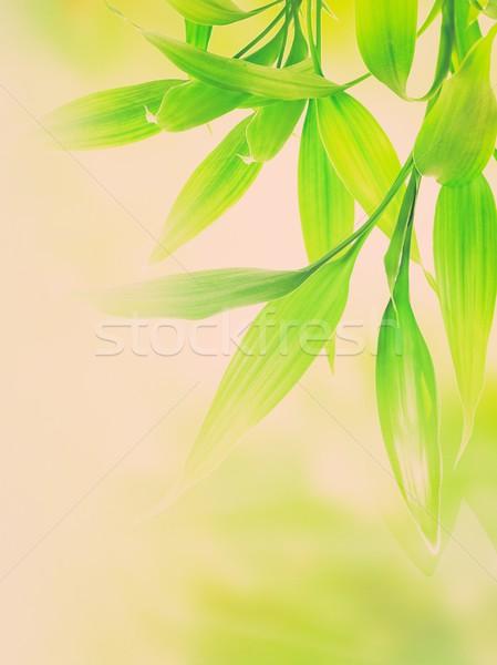 Stock fotó: Zöld · bambusz · levelek · absztrakt · elmosódott · fa