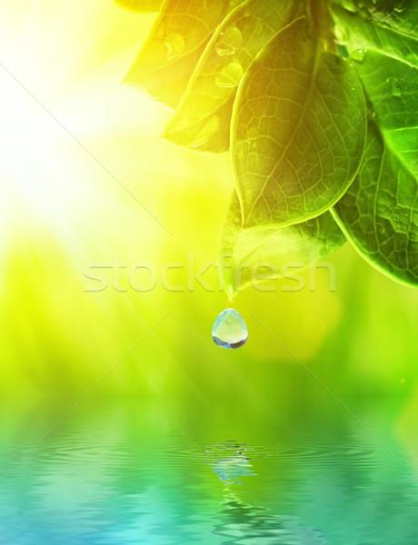 Rano rosa zielona trawa świadczonych wody wiosną Zdjęcia stock © Nejron
