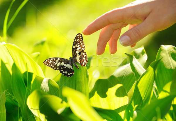 Human hand and beautiful butterfly Stock photo © Nejron