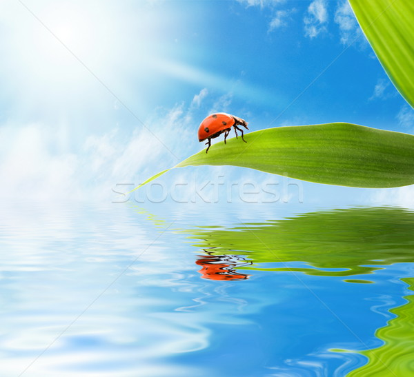 Coccinelle séance feuille verte rendu eau printemps Photo stock © Nejron