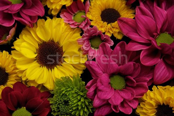 花 クローズアップ 自然 光 夏 色 ストックフォト © Nejron