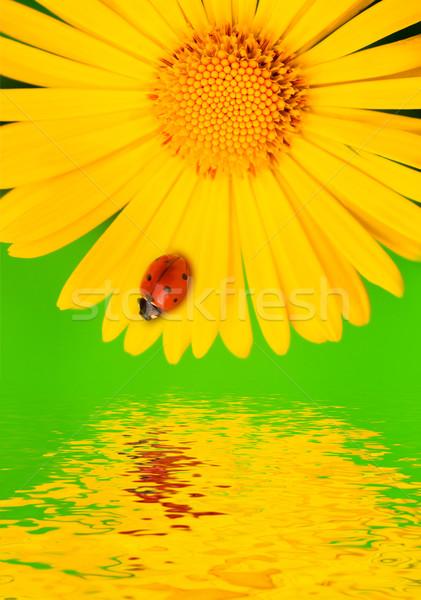 Katicabogár sárga virág víz kert nyár mező Stock fotó © Nejron