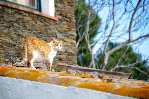 Cat on a roof. Stock photo © Nejron
