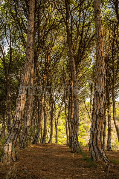 Path in beautiful forest Stock photo © Nejron
