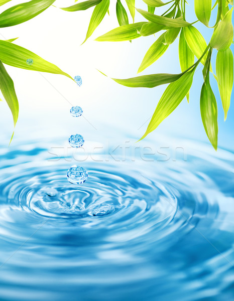 Water drops folling from a bamboo leaf Stock photo © Nejron