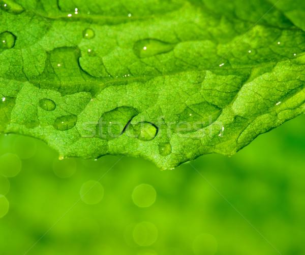 зеленый лист текстуры капли воды воды аннотация фон Сток-фото © Nejron
