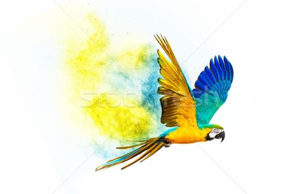Flying Parrot изолированный белый птица Сток-фото © Nejron