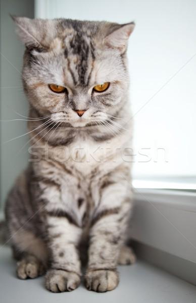 Beautiful kitten Stock photo © Nejron