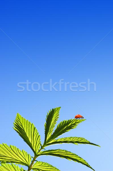 Katicabogár zöld levél kék ég textúra nap háttér Stock fotó © Nejron