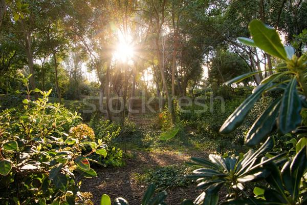 Güzel orman bahar yaprak arka plan Stok fotoğraf © Nejron