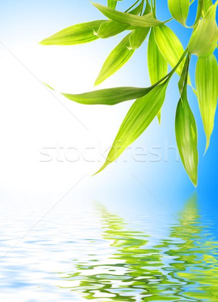 Bambusz levelek renderelt víz fa tavasz Stock fotó © Nejron