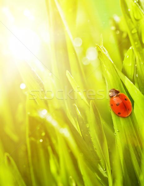 Katicabogár ül zöld fű víz tavasz fű Stock fotó © Nejron