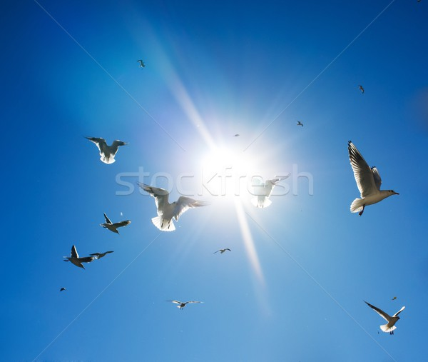 Flock of birds in sky on sunny day Stock photo © Nejron