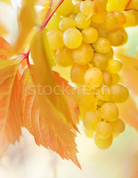 Ripe grapes close-up shot Stock photo © Nejron