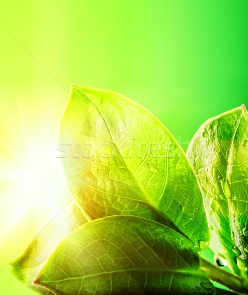 Fresh green leaves   Stock photo © Nejron