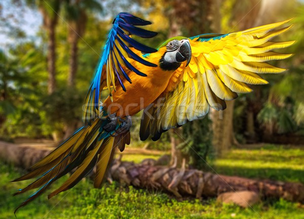 Beautiful colourful parrot over tropical background  Stock photo © Nejron