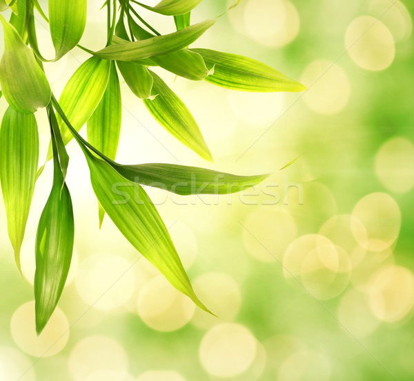 Stock photo: Bamboo leaves over abstract blurred background