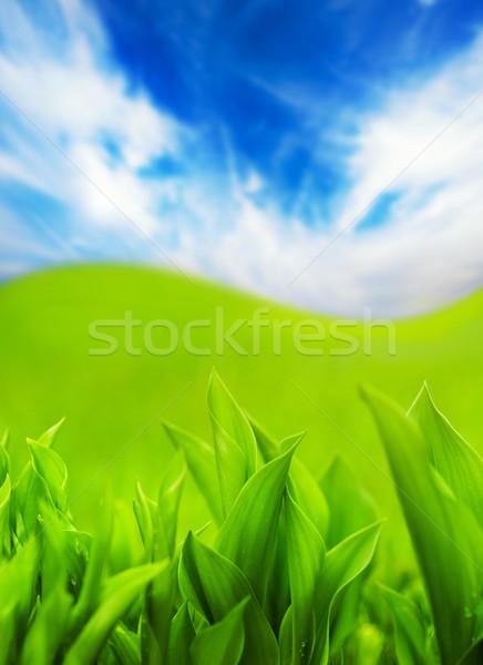świeże zielona trawa niebieski mętny niebo streszczenie Zdjęcia stock © Nejron