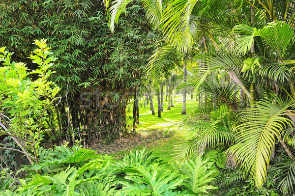 Picture of a tropical forest background Stock photo © Nejron
