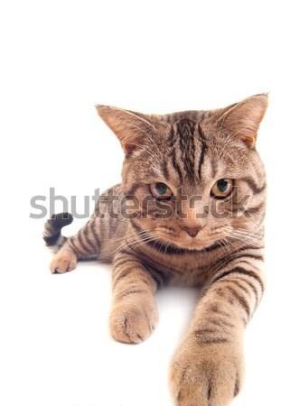 Funny kitten   Stock photo © Nejron