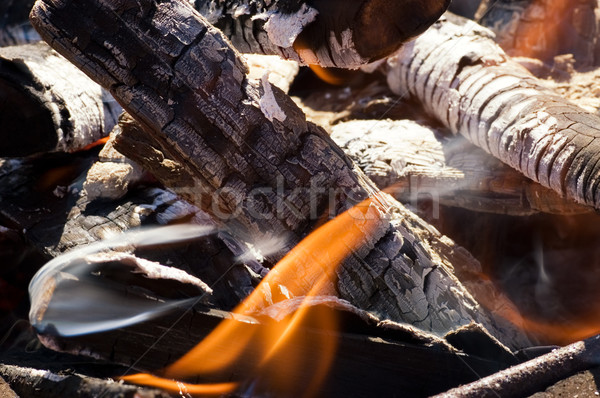 Fire in a dry forest Stock photo © Nejron