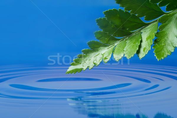 Fresche foglia verde acqua primavera erba natura Foto d'archivio © Nejron