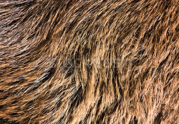 Fur texture Stock photo © Nejron