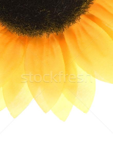 Sunflower over white background Stock photo © Nejron