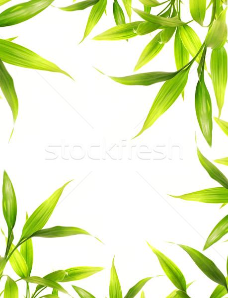 Bella bambù foglie confine bianco albero Foto d'archivio © Nejron