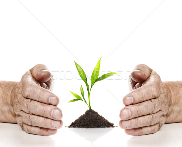 Stock photo: Old hadns and young plant between them. Isolated on white backgr