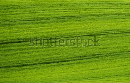 Beautiful green field background  Stock photo © Nejron