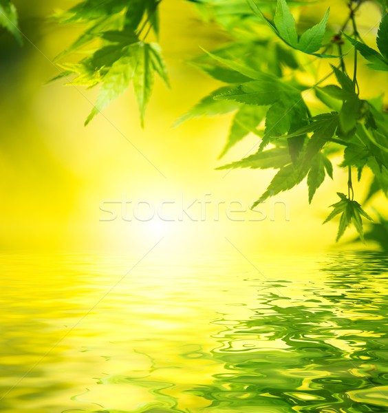 Leaves reflected in a water Stock photo © Nejron