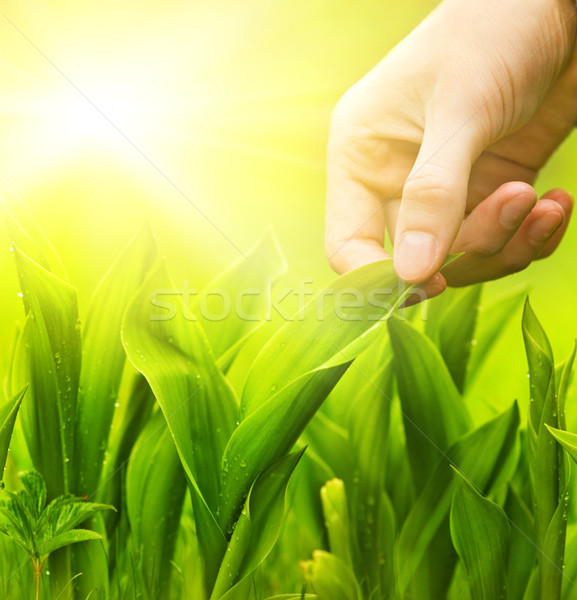 Human hand touching green grass. Environment conservation concep Stock photo © Nejron