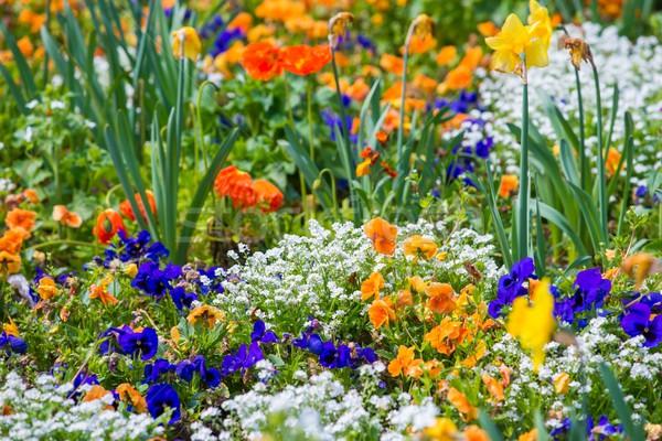 Différent coloré belle fleurs parterre de fleurs fleur Photo stock © Nejron