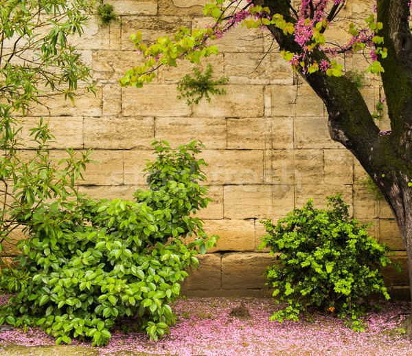 Beautiful plants and trees growing against stone wall Stock photo © Nejron
