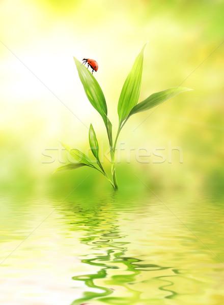 Zöld növény katicabogár víz tavasz háttér Stock fotó © Nejron
