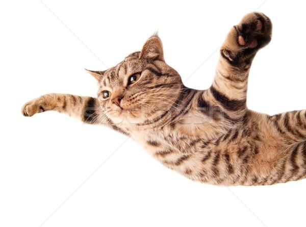 Flying funny kitten Stock photo © Nejron