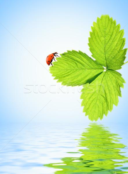 Joaninha sessão folha verde prestados água folha Foto stock © Nejron