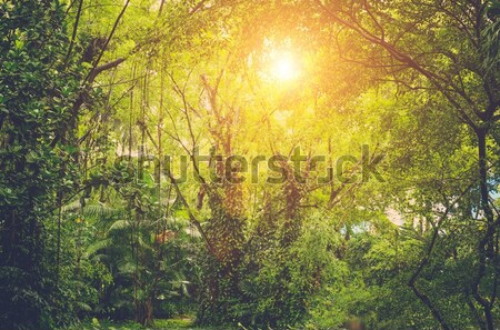 Sunshine in forest Stock photo © Nejron