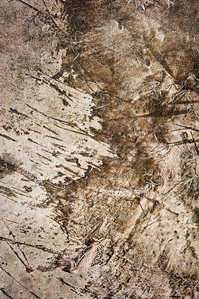 Abstract grunge texture Stock photo © Nejron