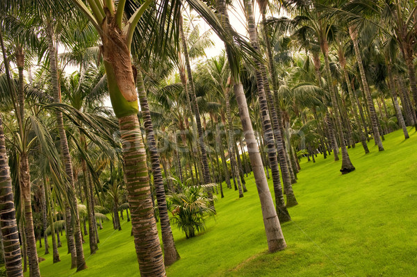Tropical forest background Stock photo © Nejron