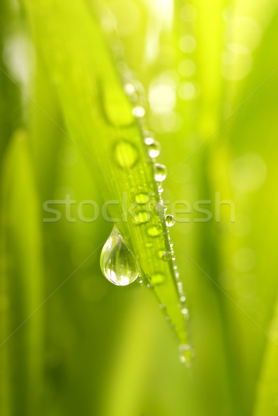 Close-up shot of green grass with rain drops on it Stock photo © Nejron