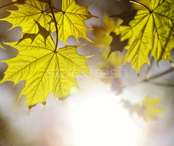 Resim yeşil yaprakları soyut bulanık bahar güneş Stok fotoğraf © Nejron