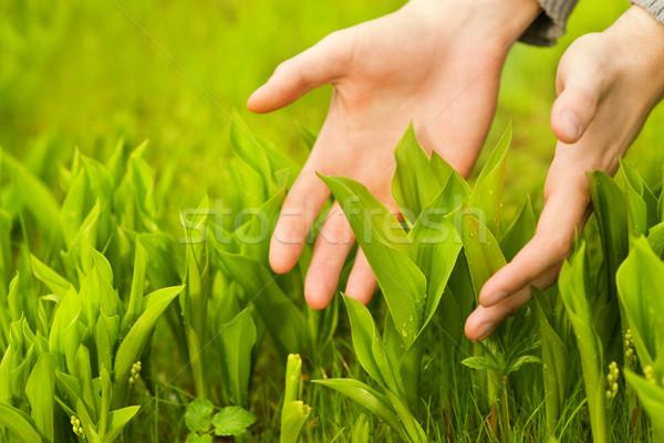 Сток-фото: человека · рук · прикасаться · зеленая · трава · солнце · лист