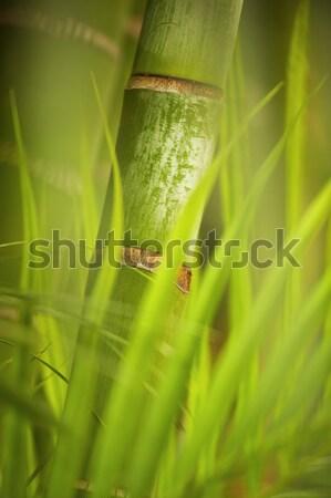 Zöld növény közelkép absztrakt természet kert Stock fotó © Nejron