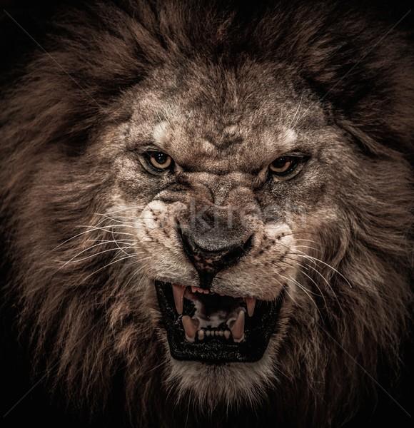 Coup lion bouche Afrique tête Photo stock © Nejron